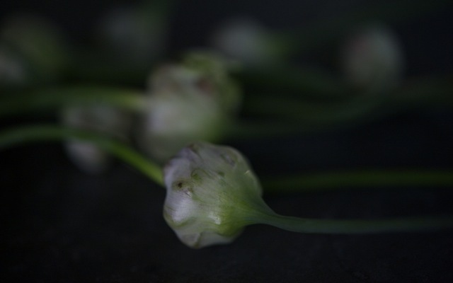 Garlic flower 790 xxx